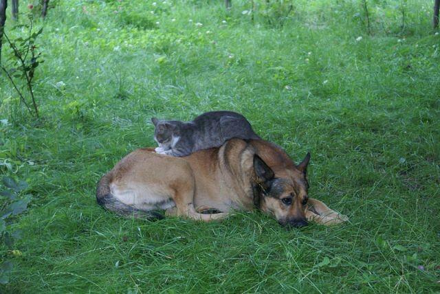 Отличные друзья