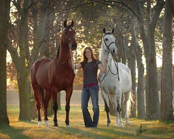 Парнокопытные лошади