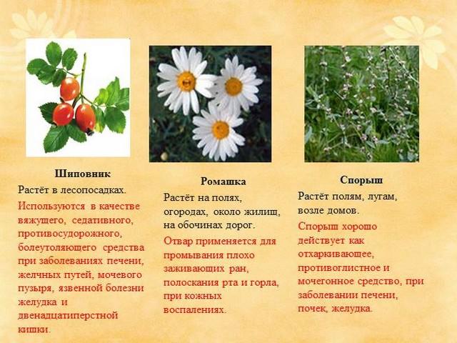 Лекарственные растения Кубани