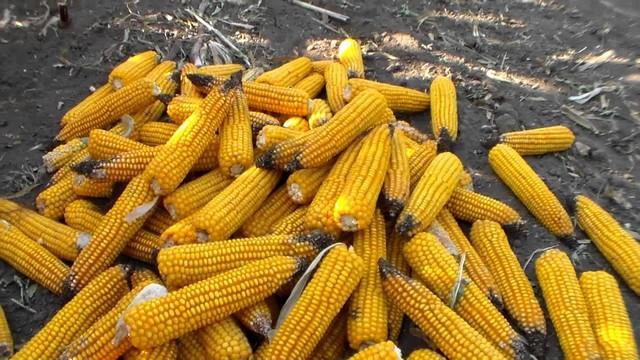 Собранный урожай