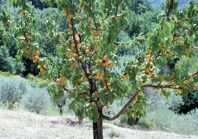 Древесная растительность