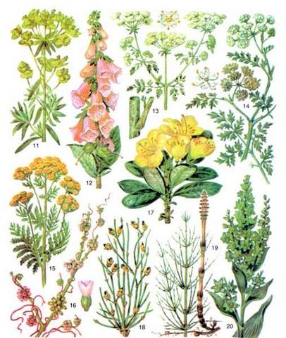 Лекарственные ядовитые растения