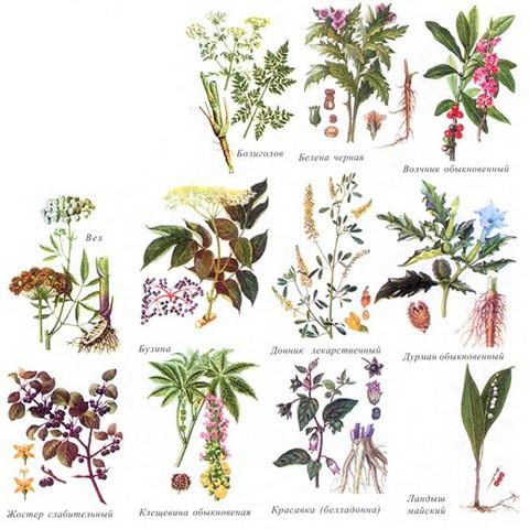 Опасные виды растений