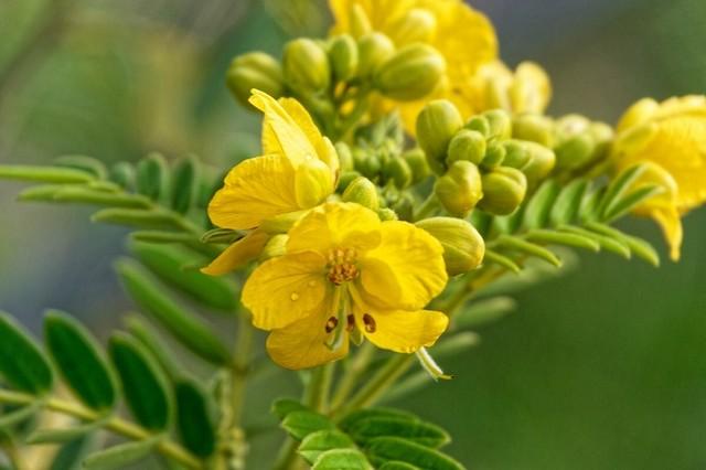 Цветковое растение
