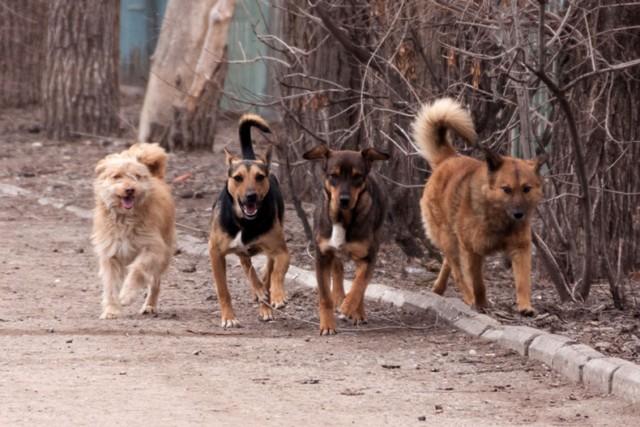Грозные собаки