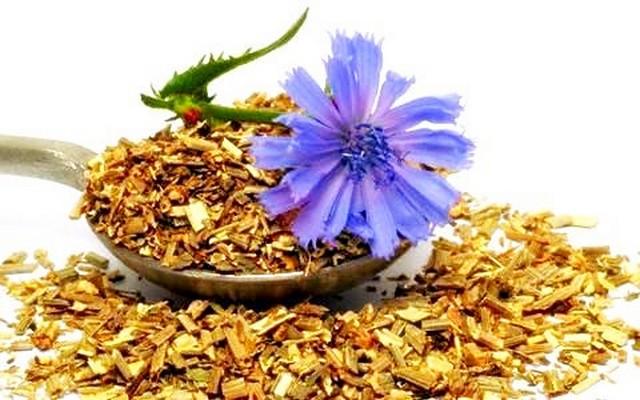 Трава цикорий лечебные свойства и противопоказания