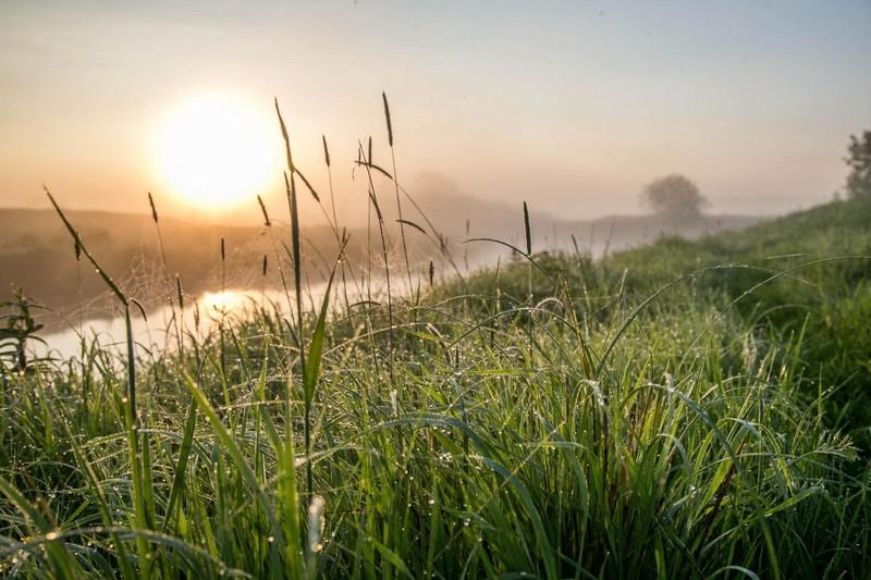Трава пырей лечебные свойства и противопоказания