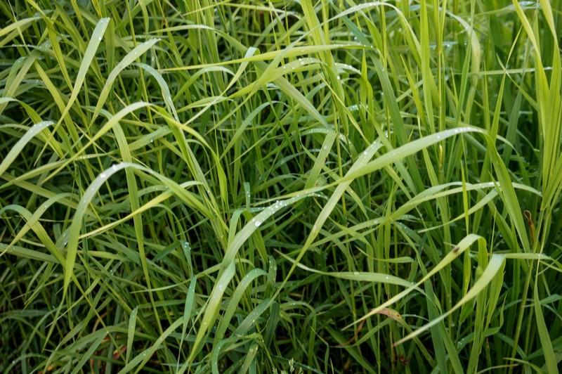 Зеленая травка