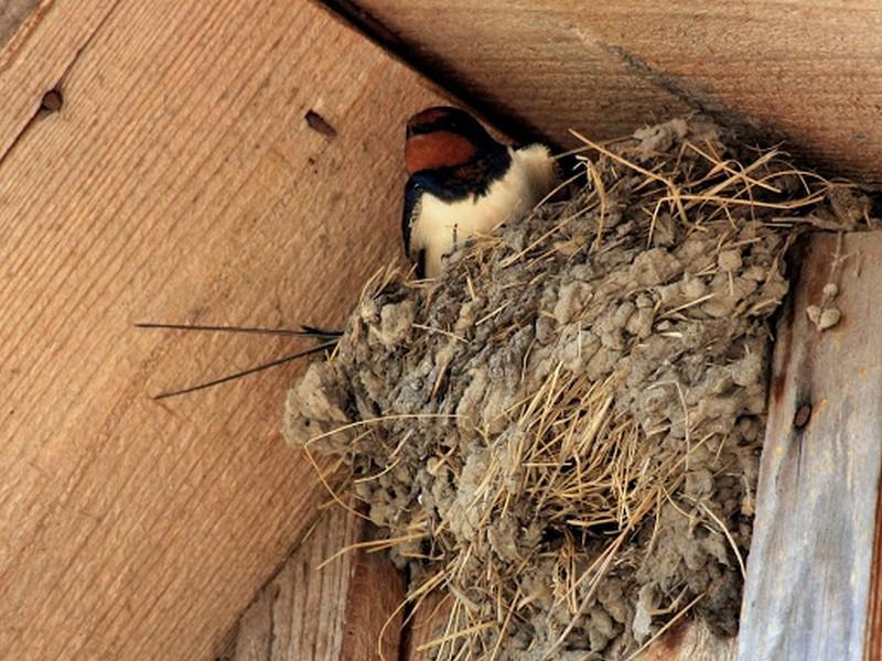 Ласточкино гнездо