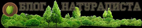Логотип сайта Блог натуралиста